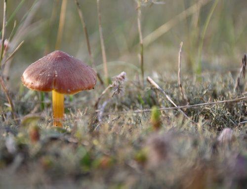 """Naturschutzgebiete: Begehung im NSG """"Spülflächen bei Schachtholm"""""""