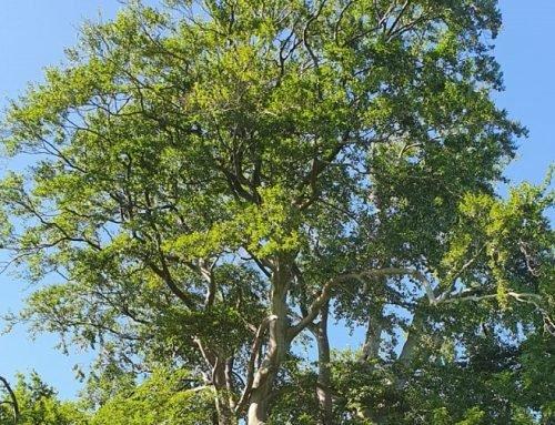 Tag der Buchenwälder: Umdenken und Wertschätzung