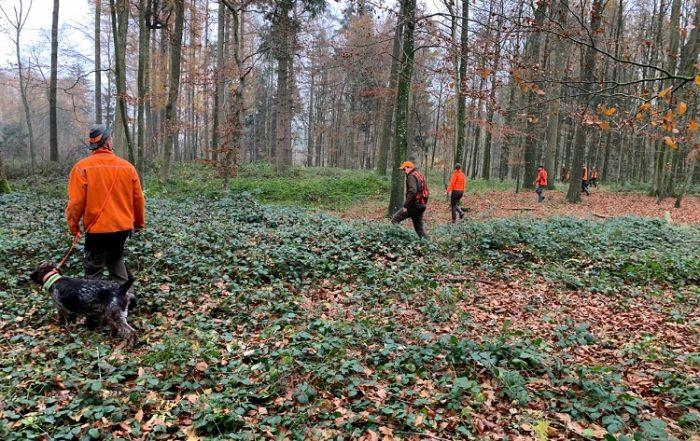 Corona: Bewegungsjagden in Schleswig-Holstein erlaubt (Foto LJV SH)