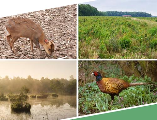 Jahresbericht zur biologischen Vielfalt 2020 veröffentlicht