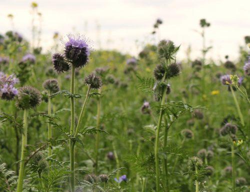 Weltbienentag: Saatgut-Rabatt für Mitglieder