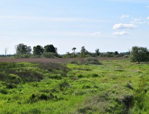 Mehr Ruhezonen für Rothirsch & Co: Stiftung Naturschutz und Landesjagdverband kooperieren beim Management großer Wildtiere