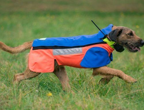 Sauenschutz für Mensch & Hund: Rabatt für LJV-Mitglieder bei Kruedener